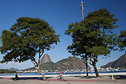Man cycling in along Botafogo seafront with Sugarloaf in the background and trees in the foreground, daytime, Rio de Janeiro.
