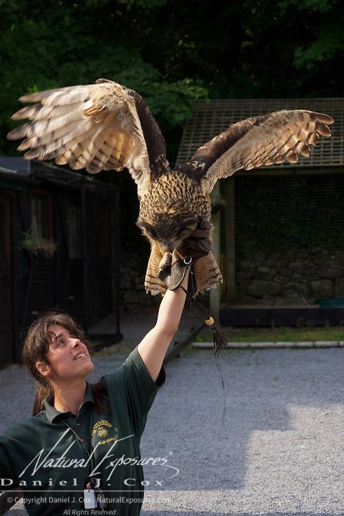 Falconer Aurelie O'Sullivan discusses a beautiful European Eagle Owl at the Ashford Castle falconry exhibit. Ireland.