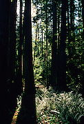 Macmillan Provincial Park, British Columbia, Canada