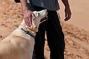 Man and his Labrador Retriever on sand dune