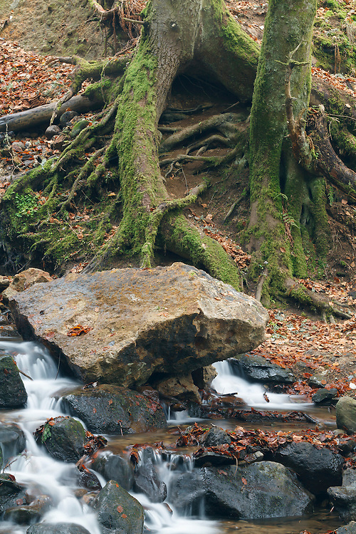 Forest Scenery with water and rocks, PNR Auvergne volcanoes, Auvergne,  France