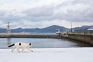 """En katt strövar omkring i hamnområde på ön Tashirojima i Japan.<br />  <br /> Tashirojima kallas för """"kattön"""" eftersom här lever hundratals katter tillsammans med ca 50 personer.   <br /> <br /> Ishinomaki, Miyagi Prefecture, Japan. <br /> <br /> Fotograf: Christina Sjögren<br /> Copyright 2018, All Rights Reserved"""