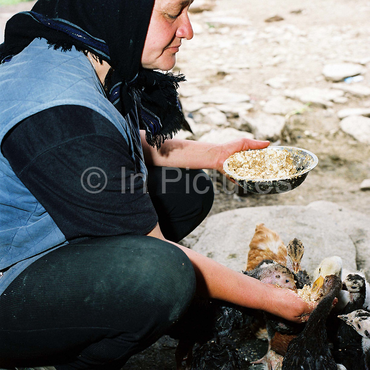 A Romanian peasant farmer feeds young ducks and chickens by hand at her smallholding in the Romanian Carpathians