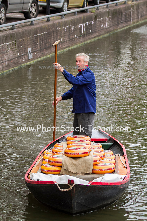 Netherlands, North Holland, Alkmaar. Man delivering yellow wheels of Dutch Cheese, by boat to cheese market.