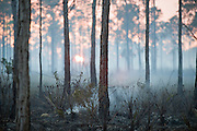 Controlled burn in the Big Cypress National Preserve in the Florida Everglades.