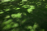 Detail of shadows and sunlight on some grass in the City of London.