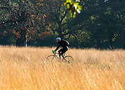 © Licensed to London News Pictures. 04/11/2014. Richmond, UK.A cyclist rides through autumnal grass.  People and animals enjoy the warm sunshine in Richmond Park, Surrey today 4th November. Britain has experienced unseasonably warm weather recently.  Photo credit : Stephen Simpson/LNP