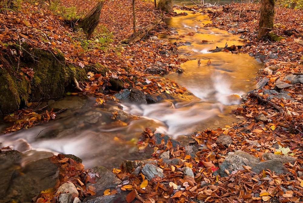 Leaf covered ground surrounds little stream through fall woods, Granville, VT