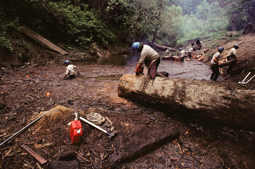 California Conservation Corps. Clearing a stream of redwood logs for the California Department of Fish & Game so that salmon can use the stream to spawn. Near Eureka, Northern California.