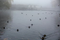 © Licensed to London News Pictures. 27/11/2020. London, UK. Ducks in Finsbury Park pond in dense fog. Freezing cold and foggy weather is forecast across many parts of the UK. Photo credit: Dinendra Haria/LNP