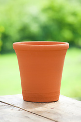 Terracotta pot. (for amaryllis)