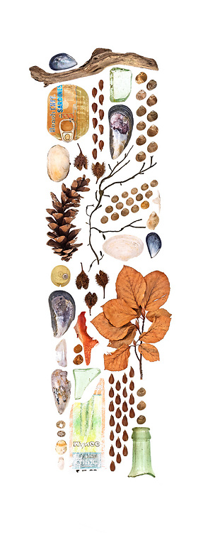 Top to bottom, left to right: Blue Mussel (Mytilus edulis), driftwood, sardine tin cover, soft shell clam (Mya arenaria), White Pine cone (Pinus strobus), beech seeds (Fagus sylvatica), beech seed capsules, Rockweed (Ascophyllum nodosum), sea glass, Blue Mussel, periwinkles, Soft Shell Clam, periwinkles, clam shell hinge, Dog Whelk (Nucella lapillus), Blue Mussel, plastic bottle cap with Northern Rock Barnacle (Semibalanus balanoides), Blue Mussel, nacre of Blue Mussel, barnacle, Limpet (Testudinalia testudinalis), Slipper Shell (Crepidula fornicata), clam, beech seed capsules, lobster claw (Homarus americanus), periwinkles stained by iron chains in the water, broken glass, plastic wrapper, beech branch, beech seeds, periwinkles, bottle neck.