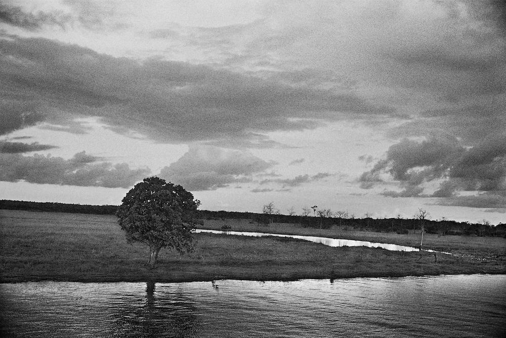 Brazil, rio branco, amazonas.<br /> <br /> La faillite de l'agriculture sur des sols peu fertiles a deja pousse les colons a se recycler dans l'orpaillage. A present, l'elevage bovin et la culture de soja se developpent de façon extensive, accelerant la deforestation.
