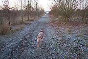 Frosty winter morning greyhound and landscape in Olney, England, United Kingdom.