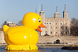 © licensed to London News Pictures. London, UK 11/12/2012. A giant plastic duck swimming on the river Thames outside City Hall in Londonas part of filming for an advertisement. Photo credit: Tolga Akmen/LNP