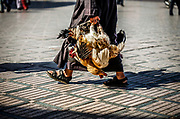 """SHOT 11/5/09 5:22:53 AM - A man carries a handful of chickens through the Djemaa el Fna in Marrakech or Marrakesh, Morocco. Jemaa el-Fnaa (Arabic: ساحة جامع الفناء saaHat jamaaʻ al-fanâ', also Jemaa el-Fna, Djema el-Fna or Djemaa el-Fnaa) is a square and market place in Marrakesh's medina quarter (old city). It remains the main square of Marrakesh, used by locals and tourists. Known as the """"Red City"""" it is an important and former imperial city in Morocco. It has a population of 1,070,838 (as of 2004), and is the capital of the mid-southwestern economic region of Marrakech-Tensift-Al Haouz, near the foothills of the snow-capped Atlas Mountains. Like many North African and Middle Eastern cities, Marrakech comprises both an old fortified city (the médina) and an adjacent modern city (called Gueliz). Marrakech has the largest traditional market (souk) in Morocco and also has one of the busiest squares in Africa and the world, Djemaa el Fna. The square bustles with acrobats, story-tellers, snake charmers, dancers, and musicians. By night, the square turns into food stalls, becoming a huge open-air restaurant. Morocco, officially the Kingdom of Morocco is a country located in North Africa with a population of nearly 32 million people and an area just under 173,000 squrare miles.(Photo by Marc Piscotty / © 2009)"""
