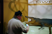 """Northern Territory Museum and Art Gallery. """"Sweetheart"""" Crocodile on exhibition and the sound recordings of the huricane that destroyed Darwin are two of the main atractions of this Darwin Museum."""