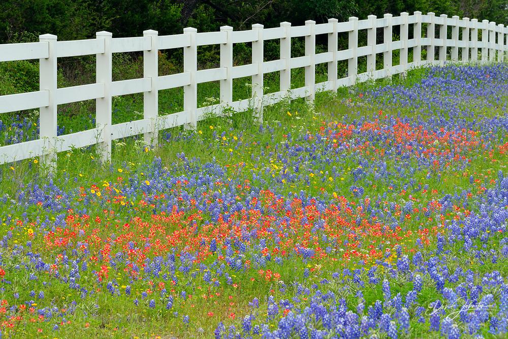 Roadside wildflowers and fenceline, Burnet County, Texas, USA