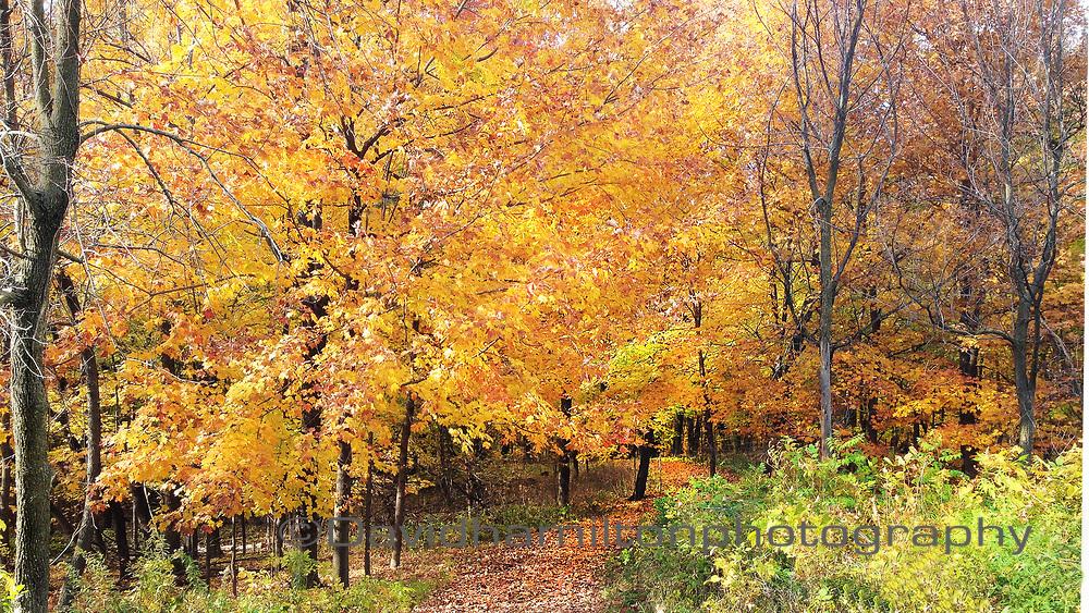 Path through autumn leaves