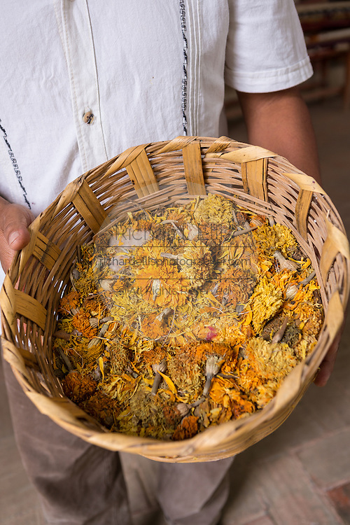 A craftsman shows dried marigolds used to dye yarn for making carpets in the village of Teotitlan de Valle in the Oaxaca Valley, Mexico.