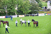 15/08/2013. Horse is recaptured at the 90th Connemara Pony show in Clifden Co. Galway. Photo:Andrew Downes