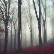 Misty beech tree forest<br /> Society6 Prints & more: http://bit.ly/2xaKqXw<br /> Redbubble prints: http://rdbl.co/2uWsTBr