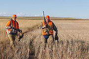 Two hunters walk across a field with pheasants they have bagged.
