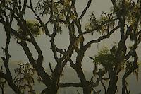 High montane rain forest on Pico Basile above 2000 m elevation, Bioko Island.