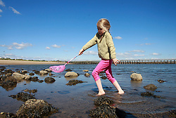 © Paul Thompson licensed to London News Pictures. 01/06/2015. Frances Tidswell-Thompson (7) exploring rock pools on Amble Beach Northumberland. Photo credit : Paul Thompson/LNP
