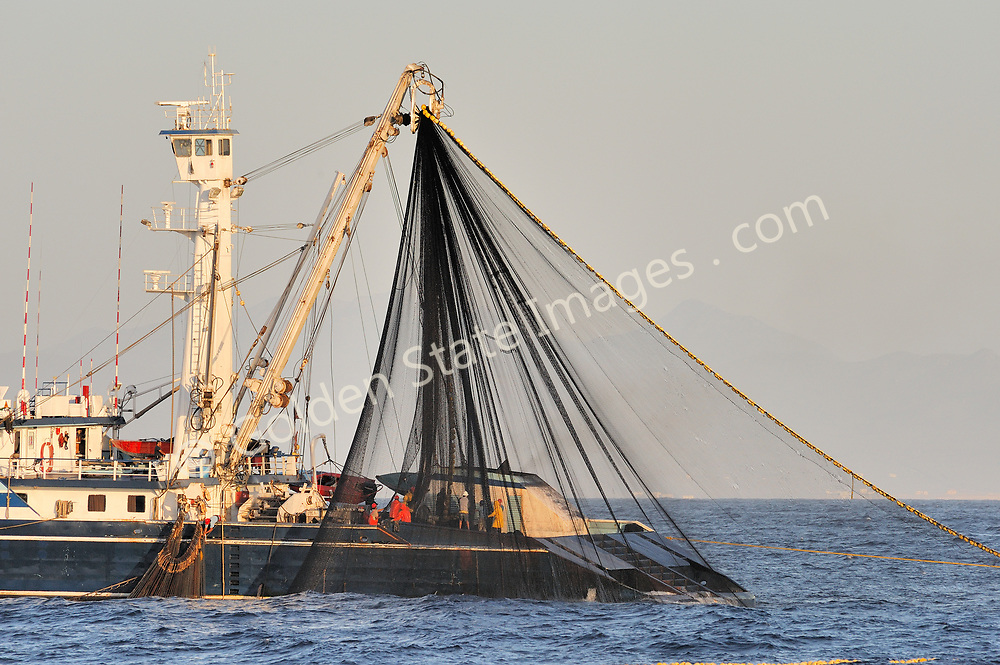 After spotting a school of Yellowfin Tuna from the air using their onboard helicopter the school is wrapped with the Seiners huge net. The name Purse Seiner comes from the process of how the bottom of the net is then drawn closed like a large purse. The net is then slowly winched back aboard the seiner along with its catch.    <br /> <br /> Other than a by-catch Striped Marlin this set and several others we saw came up completely empty.