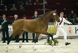 207 Ti Amo<br />KWPN hengstenkeuring 2003<br />Photo © Dirk Caremans