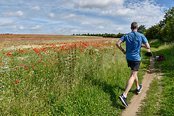 © Licensed to London News Pictures. 11/06/2017. London Colney, UK. A runner passes poppies and other wildflowers which are in bloom in a field in London Colney, near St Albans.  Lying near the busy M25 motorway that encircles the capital, the flowers are putting on a spectacular show as the traffic passes by. Photo credit : Stephen Chung/LNP