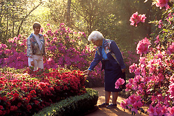 Stock photo of visitors enjoying the flowers at Bayou Bend.