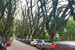 """A rua Gonçalo de Carvalho ganhou fama de ser """"a mais bonita do mundo"""" na internet. As duas calçadas são cheias de árvores, de ponta a ponta. Seria bom fotografá-la também do alto de algum prédio, porque as árvores formam uma espécie de cobertura verde. FOTO: Jefferson Bernardes/Preview.com"""