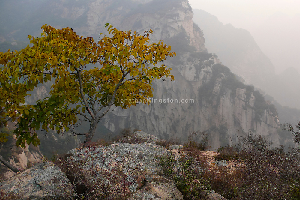 Tree on a rock in the White River Gorge near Beijing, China.