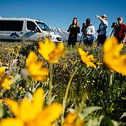 A Teton Science Schools wildlife tour stops to explore the balsamroot flowers along the Antelope Flats Road in Grand Teton National Park, Wyoming.(Matthew Bart, Maura Bushior, Katie-Cloe Stock, Lead Guide Dawson)