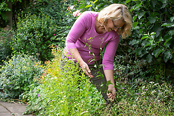 Removing weeds from a border