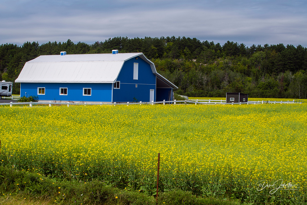 Blue barn and canola field, Chelmsford, Ontario, Canada