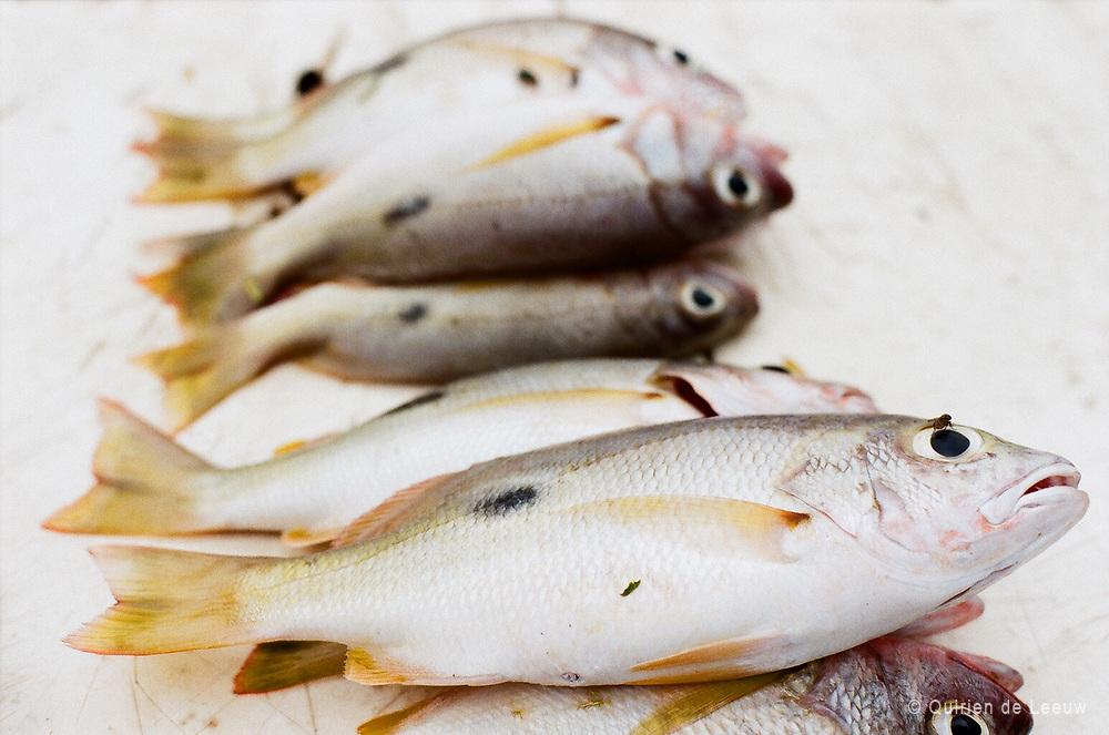 Fish on a fish market in Mombasa, Kenya