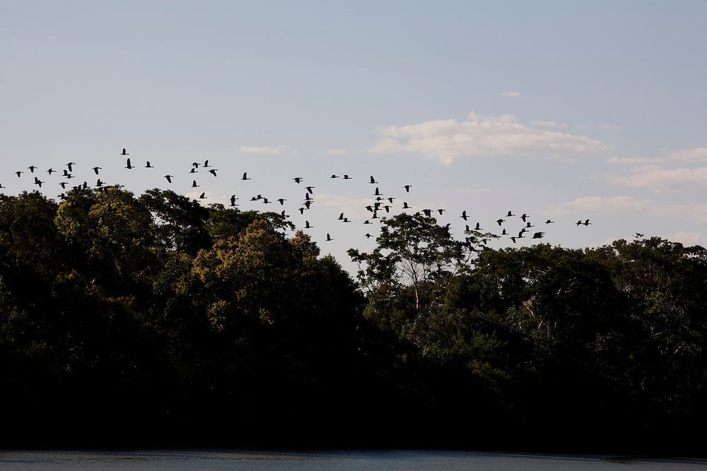 Ibiai_MG, Brasil...Rio Sao Francisco, o rio da integracao nacional. Na foto passaros voando sobre o rio...The Sao Francisco river, It is an important river for Brazil, called the river of national integration. In this photo, the birds flying over the river...Foto: LEO DRUMOND / NITRO