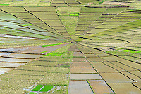 Indonesie. Flores. Region de Ruteng. Rizieres en toile d'araignee. // Indonesia. Flores. Spider's web rice fields around Ruteng.