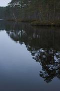 "Cloudy grey morning over lake ""Bezdibenis"" with boggy pine forests surrounding it, nature reserve ""Kārķu purvs"", Vidzeme, Latvia Ⓒ Davis Ulands   davisulands.com"