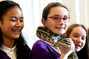 12/11/2018 Repro free: Galway Science and Technology Festival, the largest science event in Ireland, runs from 11-25 November featuring exciting talks, workshops and special events. Full programme at GalwayScience.ie. . From Our Lady's College   Amoy Meng , Python holder  Caitlin Sills and Dominika Szen looking on . Photo:Andrew Downes, Xposure.