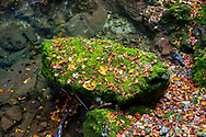 Autumn scene with leaves resting on a moss-covered stone at Vintgar Gorge in Slovenia
