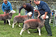 Hill farmers showing their Herdwick ewes at Borrowdale Shepherds Meet in Rosthwaite village, Cumbria on 16 September 2018. Herdwick sheep are the native breed of the central and western Lake District and live on the highest of England's mountains. They are extremely hardy and are managed in the traditional way on the Lake District fells that have been their home for generations.