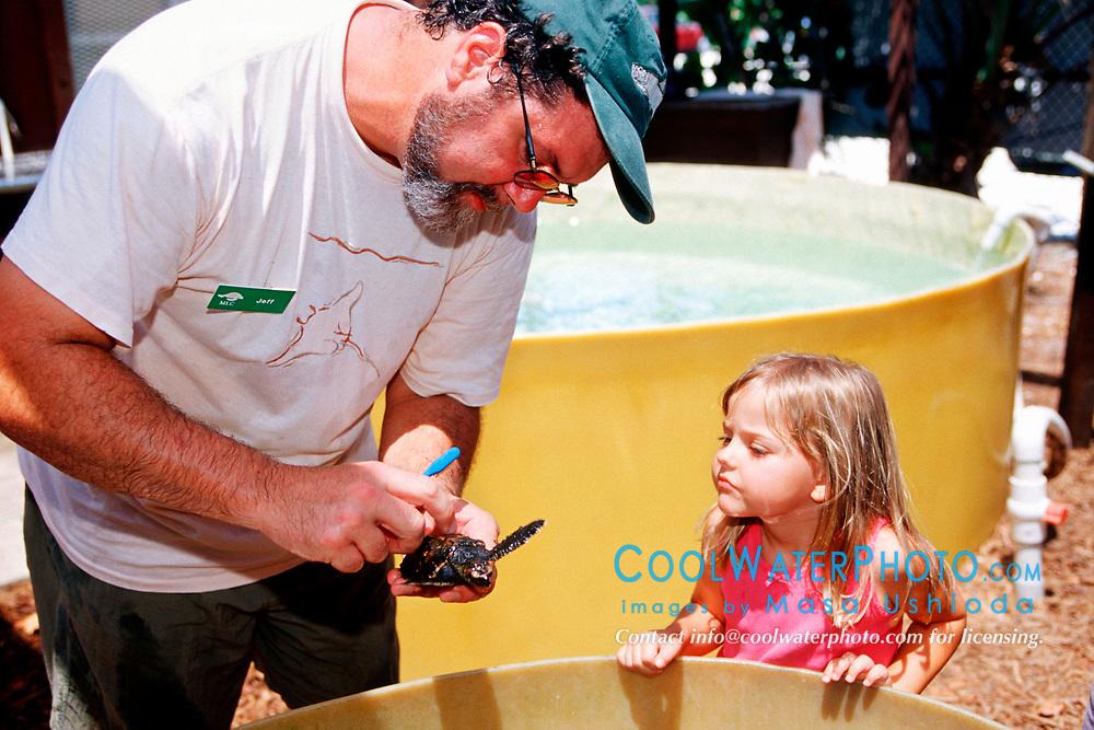 volunteer shows a baby hawksbill sea turtle to a child, Eretmochelys imbricata, Marine Center of Juno Beach, Florida