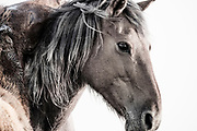 """""""The greatest pleasure of life is love"""" ~ Euripides<br /> <br /> Tracie Spence's fine art photography series of The Spanish Wild Mustangs."""