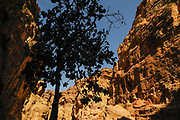 The Siq, a narrow canyon 1.2 km long, was the principal entrance to Petra from the east.