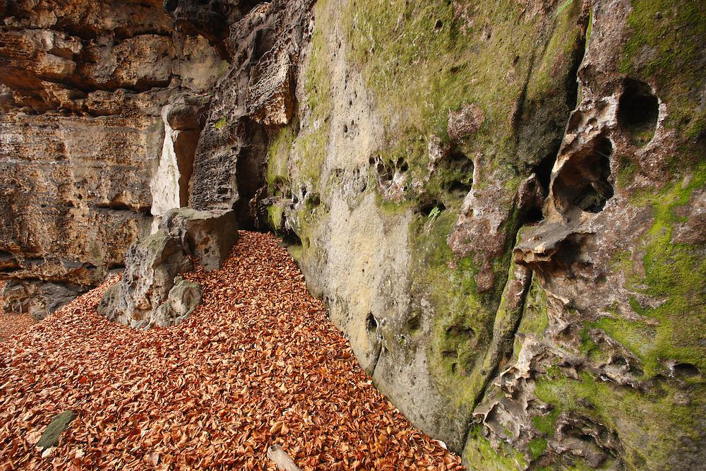 WOODS DOWN STRIBRNE STENY, 459 m. HRENSKO. CESKE SVYCARSKO. CZECH REPUBLIC.