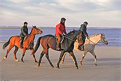 Horses & Riders On Beach